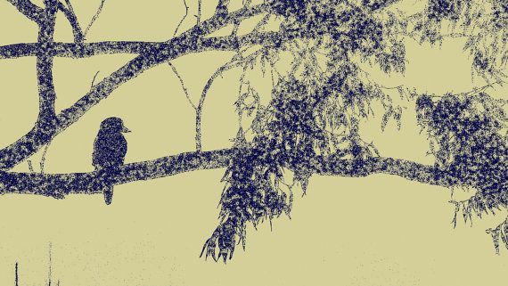 Kookaburra in Eucalyptus Tree by BlackbirdArtDesign on Etsy, $35.00