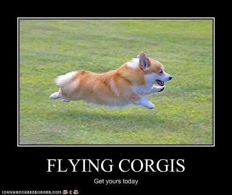 OZ Greyhound Sales Blog | Monthly Archives: May 2013 | Page 2 |Flying Dog Meme