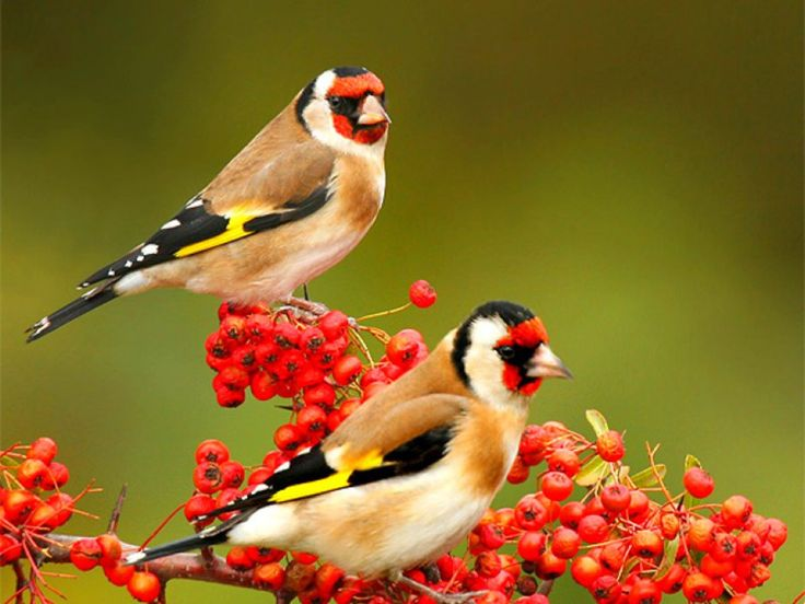 You can find the most beautiful birds in these photos. Nature birds, amazing bird types, wild birds and more are waiting for you.