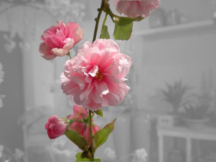Flores que siempre estan frescas...