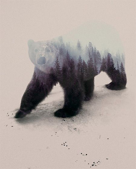 Andreas Lie Double Exposure Animal