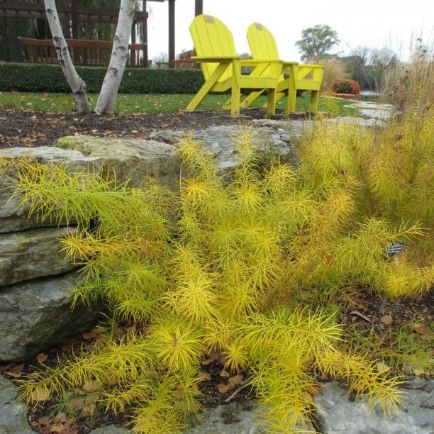 Nationalgarden Posted To Instagram Bring Fall Color To Your