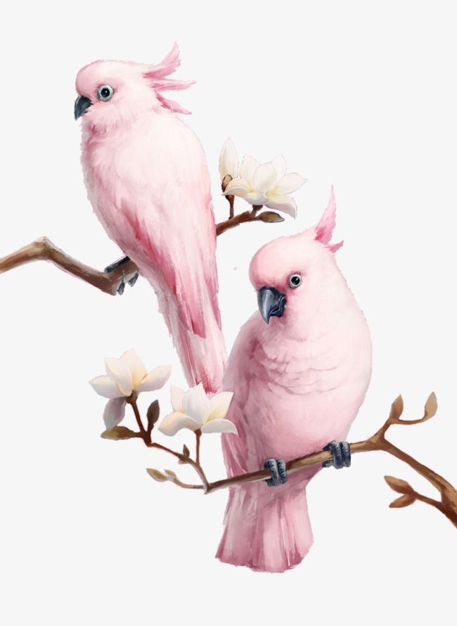 The Birds On The Branches Branches Birds Flowers Png Transparent Clipart Image And Psd File For Free Download Bird Wallpaper Animal Wallpaper Pink Bird Free download birds mobile wallpaper