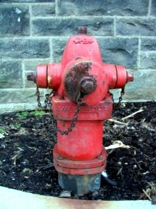 journals and fire hydrants: 170 Journals, Dog S Bff, Blog