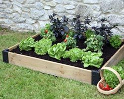 Cultiver en carrés, plus facile et meilleur rendement pour une petite famille.