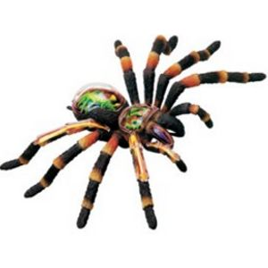 X-Ray Tarantula Spider Anatomy Model