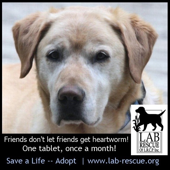 Friends don't let friends get heartworm