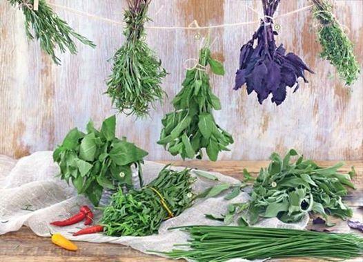 сочетание разных трав с продуктами