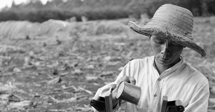 Auto-retrato, Plantio de milho, 1943 (Chácara Arara, Londrina/PR) Haruo Ohara