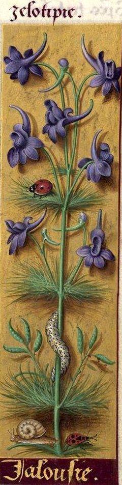 Jalousie - Zelotipie (Delphinium Consolida L. = pied d'alouette) -- Grandes Heures d'Anne de Bretagne, BNF, Ms Latin 9474, 1503-1508, f°35r