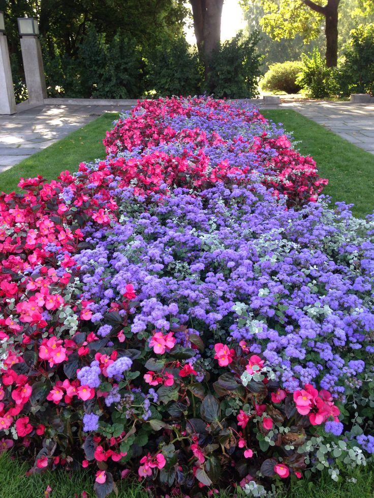 Norwegian flowers 2014