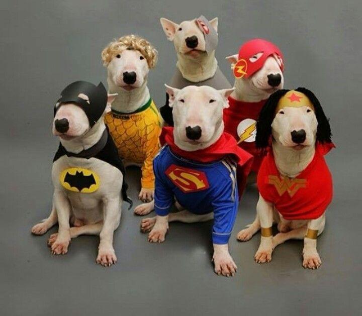 Bull Terriers:  Keeping America Safe!