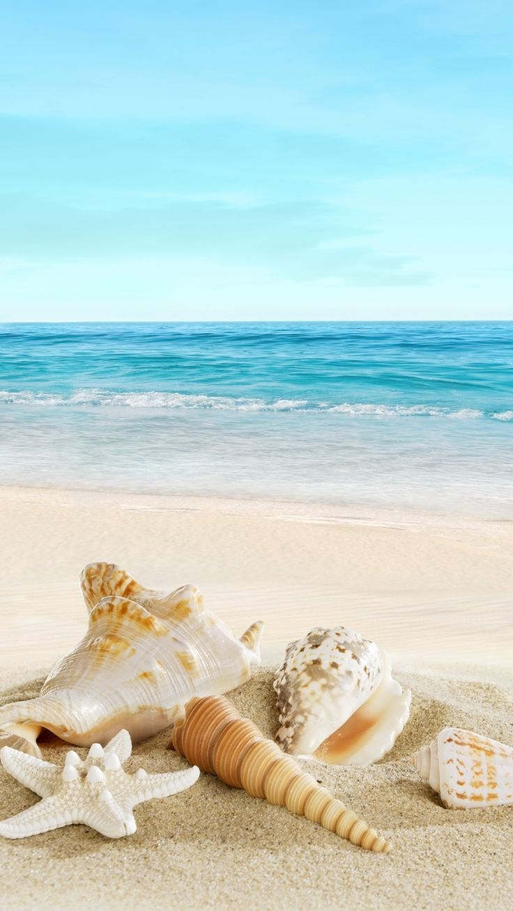 Nature Sunny Sea Shell Beach iPhone 6 wallpaper