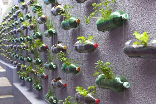 Soda bottle plant holdersPlastic Bottle, Herbs Garden, Bottle Garden, Streetart