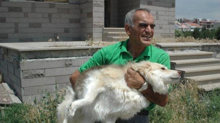 Ankara'da belediyeden emekli olduktan sonra kendini sokak köpeklerine adayan Nevzat Eski, aldığı emekli maaşıyla 65 köpeğe bakıyor. Detaylar ajanimo.com'da.. #ajanimo #ajanbrian #hayvan #animal #dog #köpek