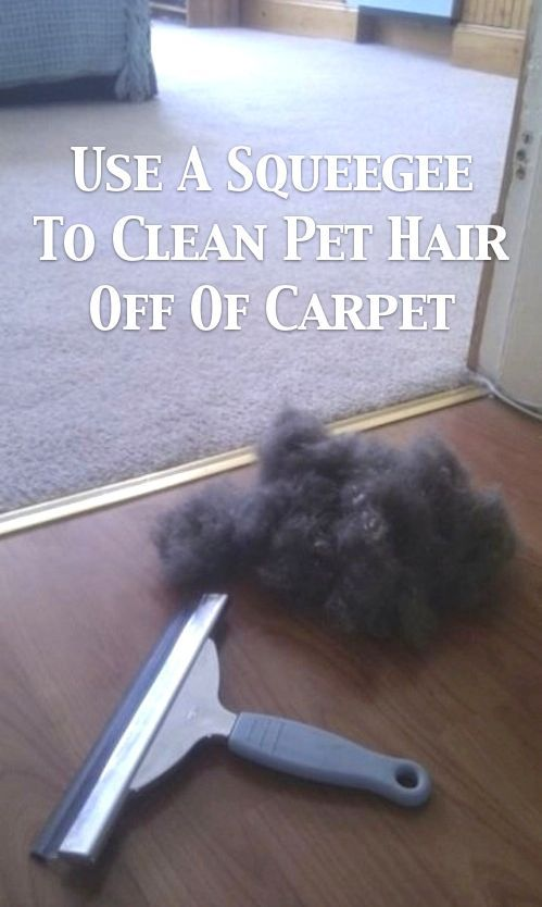 Use a sqeegee as a quick and easy way to wipe pet hair off of your carpets and rugs. (Yeah... pet hair)