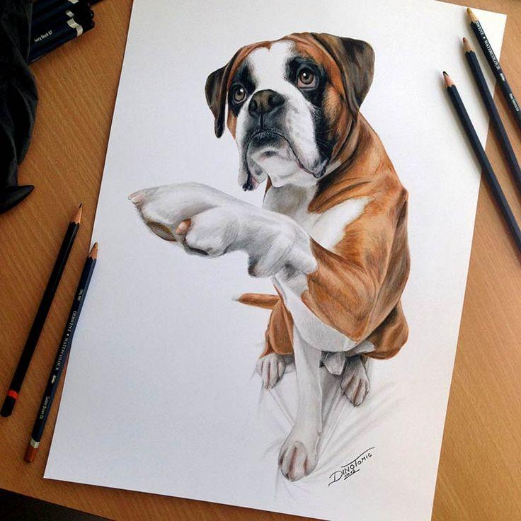 профессиональные рисунки цветными карандашами, рисунки цветными карандашами фото, животные цветными карандашами, прикольные рисунки цветными карандашами, собака цветными карандашами