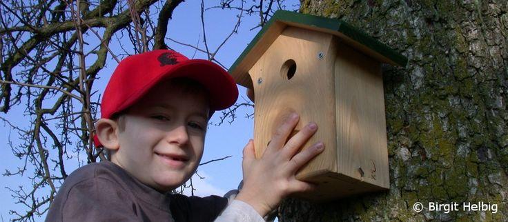 Bauanleitung Nisthilfen für Meisen, Spatzen, Mauersegler und weitere Vögel