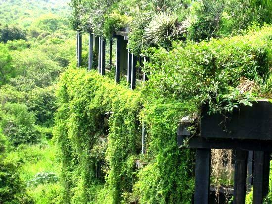 Kandalama Hotel, Dambulla, Sri Lanka. Architect: Geoffrey Bawa.  Photo via Greenroofs.com.