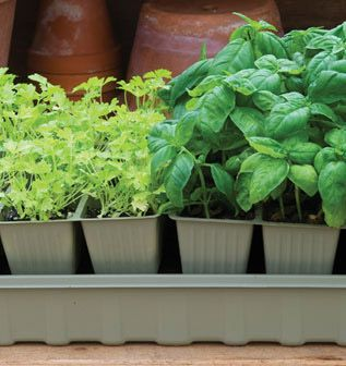 Great Gift For Gardeners! Seed Starting Supplies   Greenhouse Kits, Grow  Lights, Heat