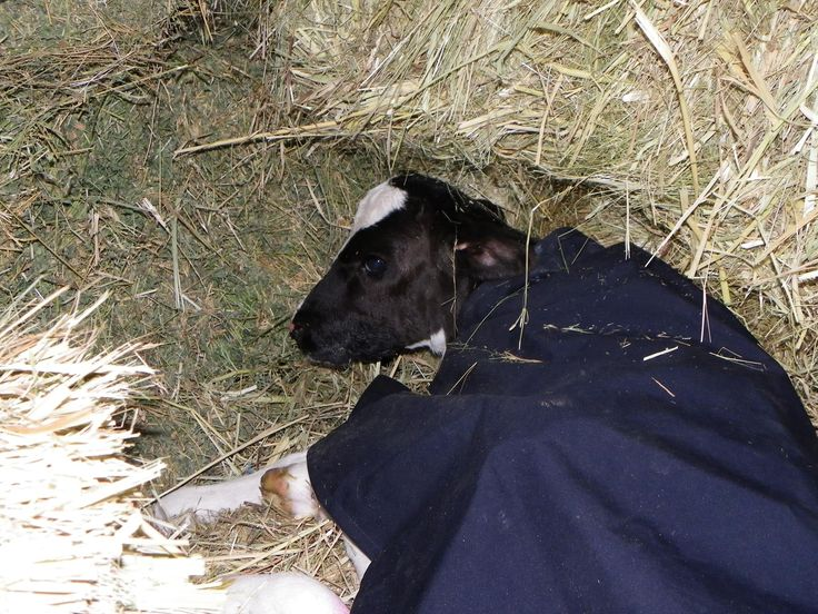 This tiny girl is 5 weeks premature.  All tuck in and keeping warm