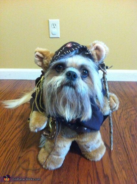 100 creative diy costume ideas for dogs - Dog Halloween Ideas