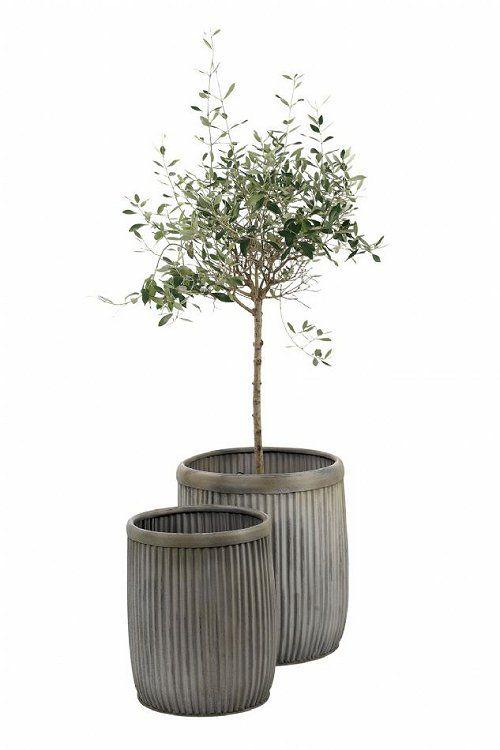 het is volgens mij wel gezellig om een groene plant in huis te zetten.. mag best groot zijn, je huis lijkt best hoog namelijk.. kan bijvoorbeeld bij het raam staan.. of achter..