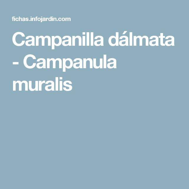 Campanilla dálmata - Campanula muralis