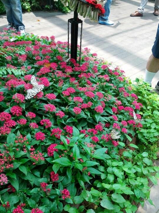 Changi Butterfly Garden. Terminal 3, Changi Airport, Singapore.