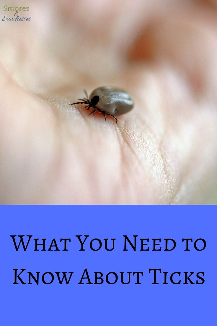 What You Need to Know About Ticks - Smores and Sundresses - A Camping Blog