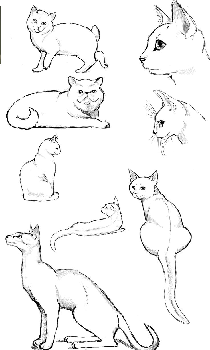 48 best How to cat drawing images on Pinterest | Animal anatomy ...