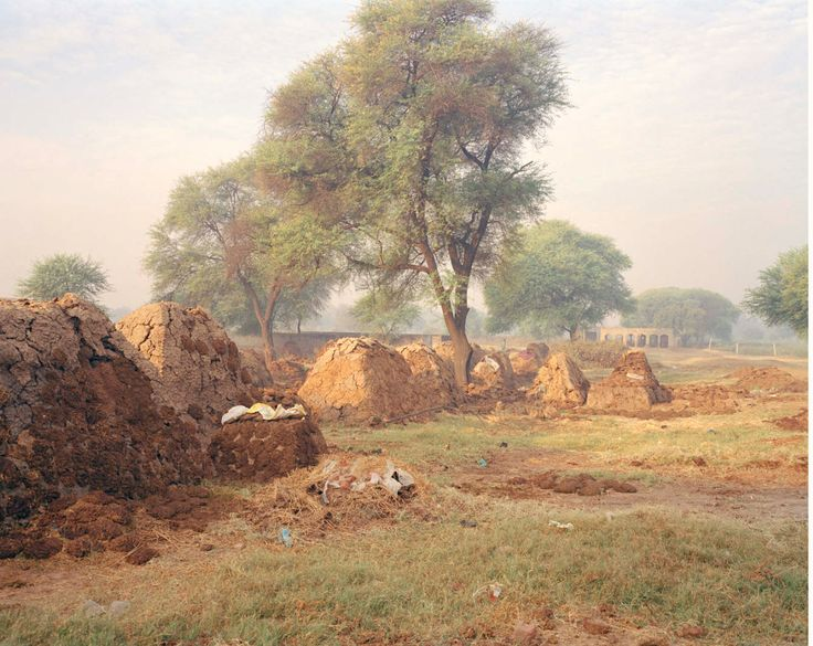 Olivia Arthur - love this photograph from the photographer's India series, very painterly with the tones and the trees moving in the wind. It's almost hard to tell this is even in India, in my mind.