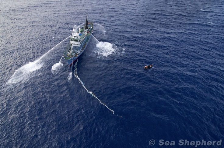 The Yushin Maru 3 at a standstill after it's props were temporarily fouled by the Sea Shepherd Small Boat Crew Photo: Billy Danger / Sea Shepherd