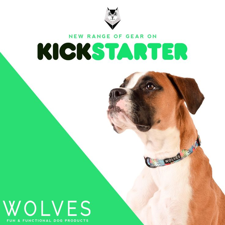 Fun + Functional Dog Products on Kickstarter now! Join the pack