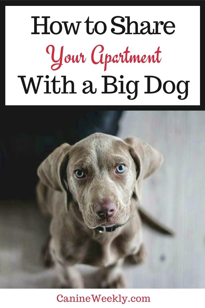 Dog Training Tips Any Behavioral Concerns That Surface Suddenly