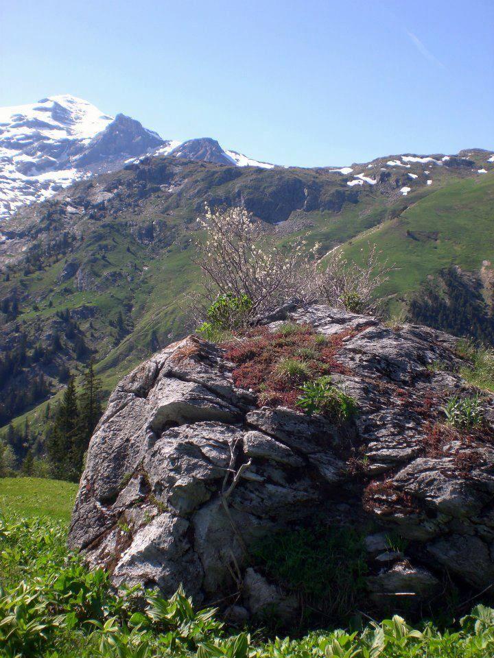Haute-Alps