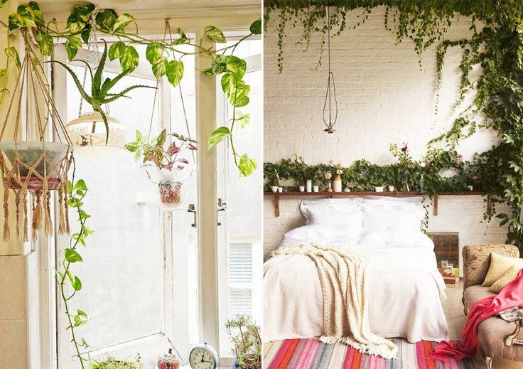 Красивые зеленые лианы в интерьере комнаты