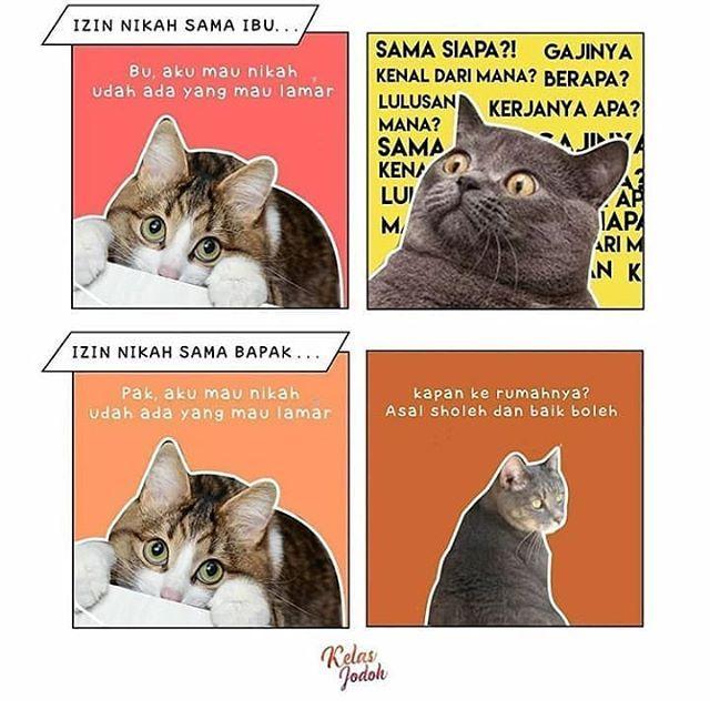 Gambar Kucing Joget godean.web.id