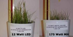PAR vs PAR. Useful light to grow is keep to LED lighting. 12 watt LED vs. 175 MH. Look at the growth difference. Applies to plants and corals!  This is the way to take your aquarium to the next level!  http://www.aquarium-pond-answers.com/2012/03/pur-vs-par-in-aquarium-lighting.html