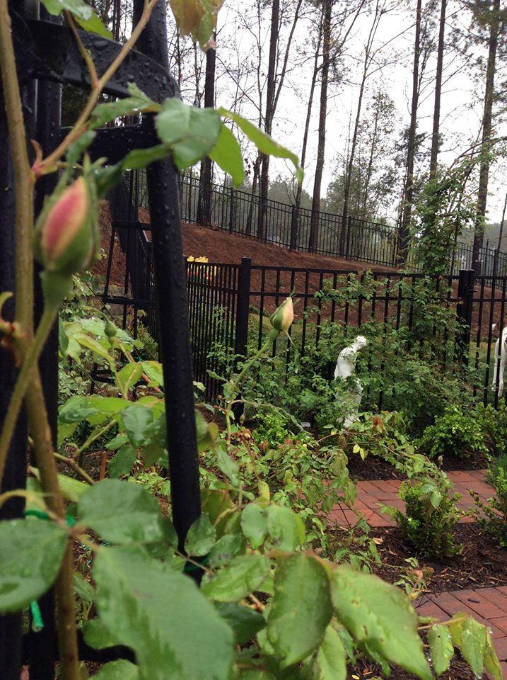 Rose Garden at Woodward Ridge