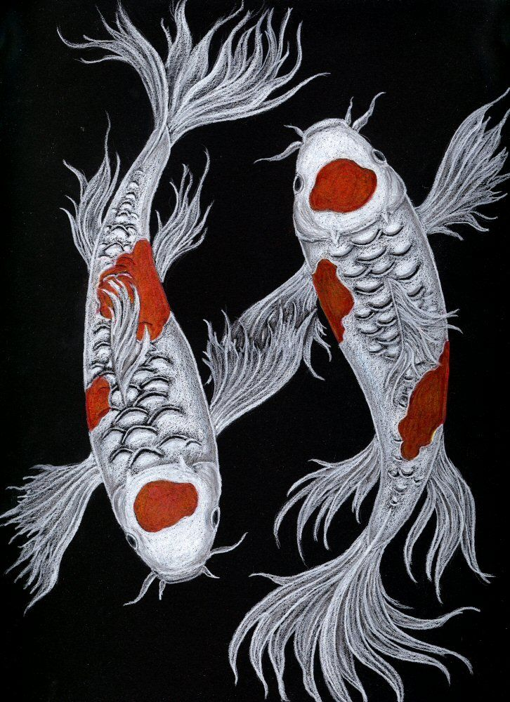 Colored pencils on black paper.  Koi Symmetry by celestriastars on deviantART