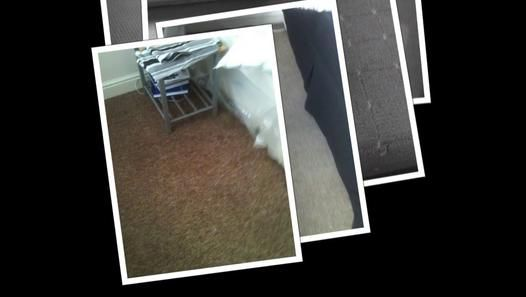 I just wanted to share some of my work with you before you book. If you want to book my services visit http://www.carpetcleaningwigan.net