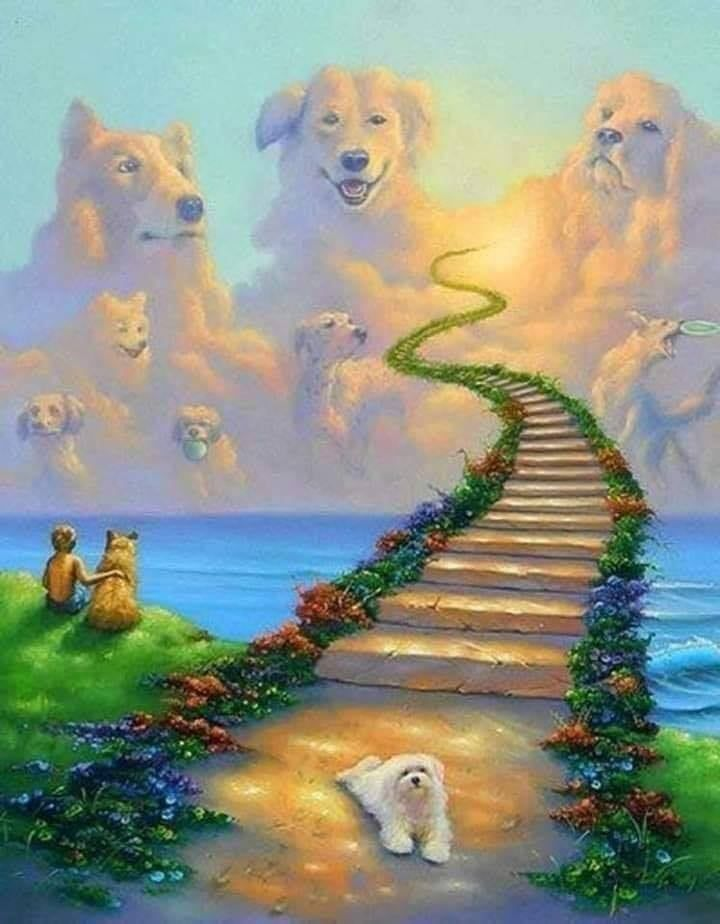 Pin By Danny Pyle On Dogs Dog Heaven Rainbow Bridge All Dogs