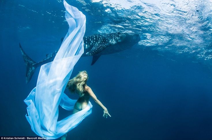 Working together: Underwater model, Hannah Fraser, dances infront of a passing Whale Shark in Oslob, Philippines
