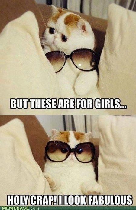 I love these cats.: Cats, So Cute, Funny Cat, Funnycat, So Funny, Sunglasses, Fabulou, Socute, Animal