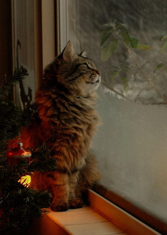 """""""...and may all your Christmases be white."""" --Irving Berlin...it looks like meowmers..."""