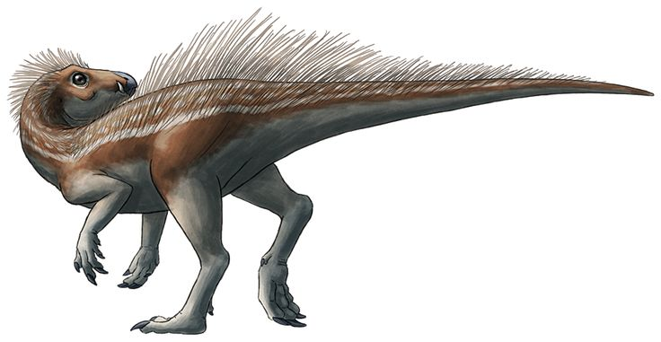 """P is for Pegomastax  Pegomastax africana was a heterodontosaurid from the Lower Jurassic of South Africa, living about 195 million years ago. It probably measured no more than 60cm in length (~2ft). A partial skull specimen was collected in the 1960s, but it wasn't officially described and recognized as a unique genus until 2012.  Heterodontosaurids were an early group of small ornithischian dinosaurs. Their name, """"different-toothed lizards"""", refers to their odd teeth: a set of pointy…"""