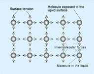 What Are the Primary Conditions Affecting Surface Tension?