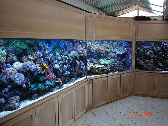 2200 Gallon Reef Tank. Wow. If Only.