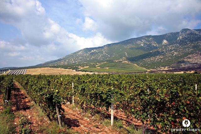 Ktima Biblia Chora's vineyard.